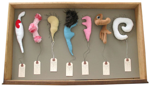Specimen Drawer NX35A-7114-B16, sculpture, Soft sculptures and specimen tags in wooden file drawer (overhead view) - Carol Es