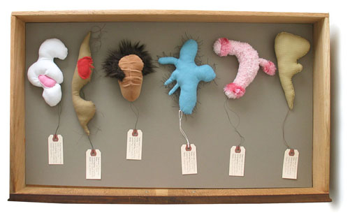 Specimen Drawer LA26R-7115-B73, sculpture, Soft sculptures and specimen tags in wooden file drawer (overhead view) - Carol Es